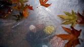 Bayangan seorang pedagang kaki lima menjual apel terlihat di balik lembaran plastik yang ia gunakan untuk melindungi diri dari hujan di Srinagar. (Reuters/Danish Ismail)