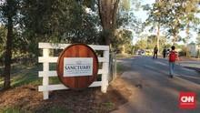 Mencicip Cita Rasa Serba Anggur di Winery Terbesar Queensland