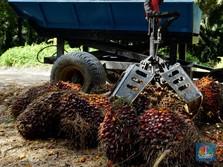 Ekspor Sawit Malaysia Meningkat, Harga CPO Terangkat