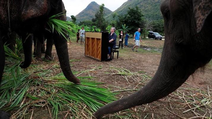 Profesi Unik, Mainkan Piano untuk Gajah yang Sakit