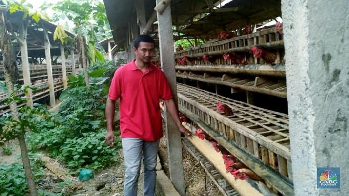 Kondisi industri peternakan ayam potong (broiler) rakyat dan mandiri semakin memprihatinkan.