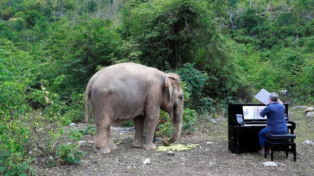 Relawan Inggris, Paul telah bermain piano untuk gajah Thailand bernama Lam Duan yang berusia 65 tahun di Thailand. REUTERS / Soe Zeya Tun
