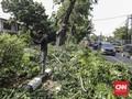 Hujan dan Angin Kencang di Surabaya, Sejumlah Pohon Tumbang
