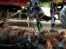 CPO Jadi Biang Kerok Ekspor RI Amblas 11,33% di Februari 2019
