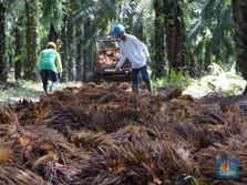RI Bersih-bersih Perkebunan Kelapa Sawit