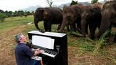 Para gajah, termasuk Lam Duan, biasanya akan mendekati Barton saat dia mulai bermain. Mereka tampak tenang dan fokus pada musik.(REUTERS/Soe Zeya Tun)