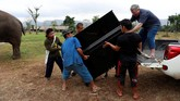 Relawan asal Inggris Paul Barton (57) tergerak untuk memberikan terapi musik pada gajah yang sakit dan kelelahandi perbatasanThailand-Myanmar, tepatnya Kanchanaburi, Thailand,dengan menggunakan pianonya. (REUTERS/Soe Zeya Tun)