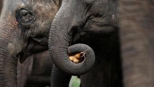 Merekam Momen Tahun Baru Pawang Gajah di Ragunan