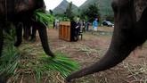 Di Elephants World, para gajah mendapatkan makanan dan perawatan yang baik untuk penyakit fisik mereka, tetapi musik, dan perlakuan istimewa yang tampaknya mereka sukai.(REUTERS/Soe Zeya Tun)