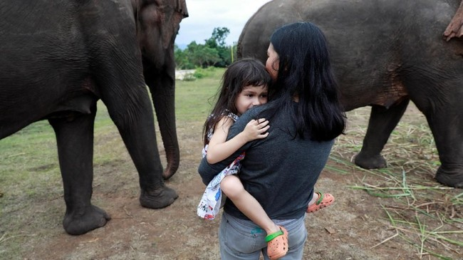 Hampir 80 persen dari sekitar 3.000 gajah di tempat-tempat wisata di Thailand, Kamboja, India, Laos, Nepal dan Sri Lanka, sakit dan kelelahan karenadipekerjakan secara berlebihan. (REUTERS/Soe Zeya Tun)