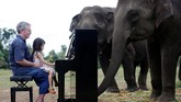 Beberapa kali dalam seminggu, Paul, yang merupakan pianis klasik, memainkan piano untuk memberi ketenangan jiwa kepada para gajah.(REUTERS/Soe Zeya Tun)