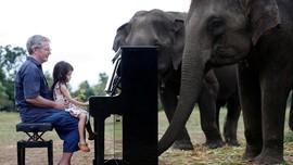 FOTO: Saat Gajah Ikut Nikmati Musik Klasik