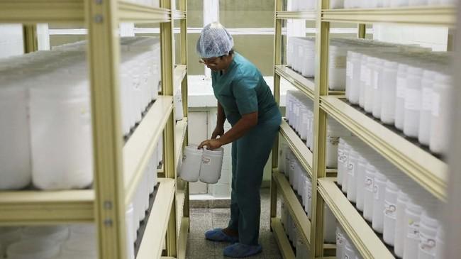 Ada sekitar 6 ribu kalajengking hidup di wadah plastik yang disimpat berderet dalam laboratorium Labiofam. Sekali dalam sebulan, petugas menyentakkan listrik 18V ke beberapa ekornya untuk memicu pelepasan beberapa tetes racun. (REUTERS/Stringer)