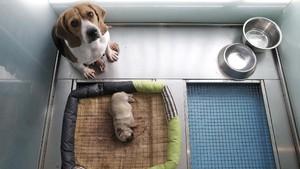 FOTO: China Sukses Kloning Anak Anjing Pertama di Dunia