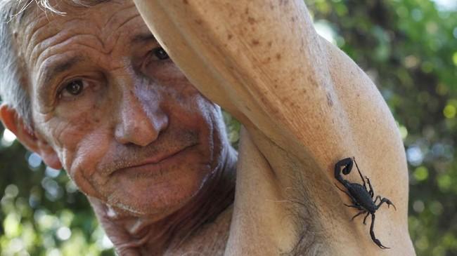 Pepe Casanas (78), menggunakan racun kalajengking itu sebagai obat reumatiknya. Dia kerap berburu kalajengking yang kemudian bakal menyengatnya. (REUTERS/Stringer)