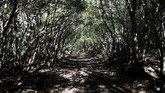 Hutan Aokigahara menjadi perbincangan di dunia setelah seorang Youtuber, Logan Paul, merekam video sedang berada di dalamnya sambil menyorot korban gantung diri di salah satu pohonnya.