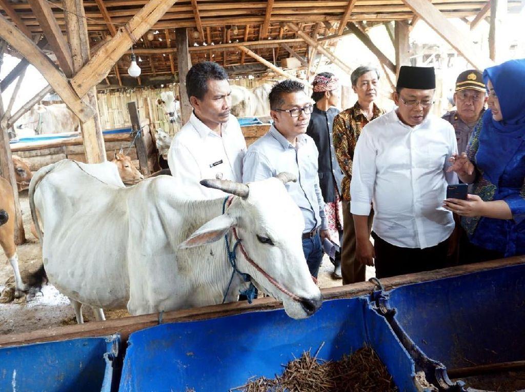 Teknologi mutakhir ini merupakan solusi digital bertajuk Satwa Nusantara untuk peternak sapi di Situbondo. Foto: dok. XL