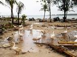 Basarnas: Banyak Korban Tsunami Selat Sunda di Area Terpencil
