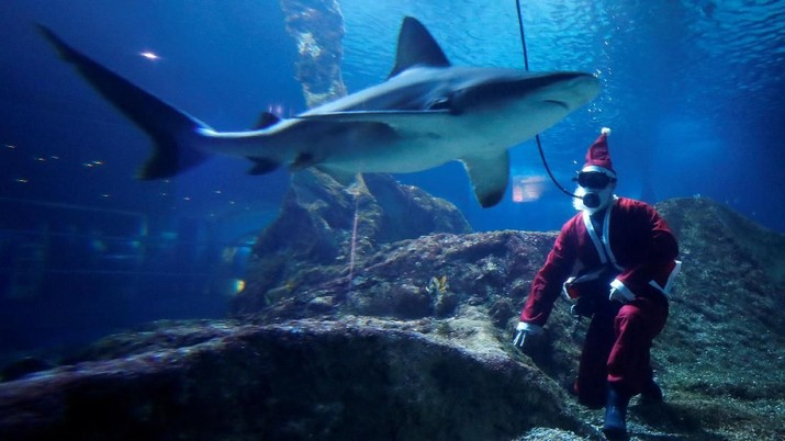 A diver wearing a Santa Claus costume poses with sharks in Marineland animal park in Antibes, France, December 21, 2018.  REUTERS/Eric Gaillard