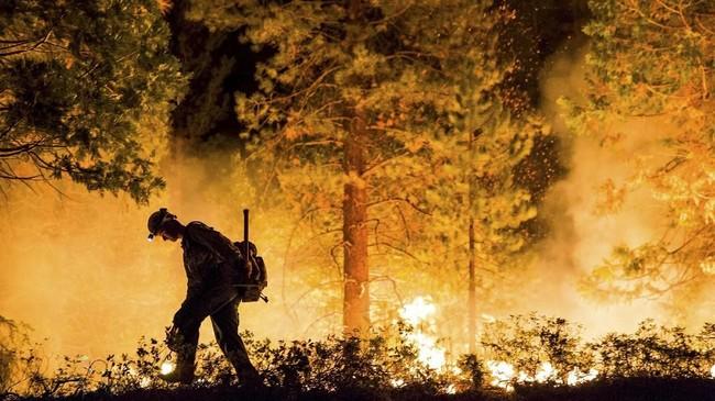 Seorang pria berjalan di tengah hutan California yang terbakar. Kebakaran ini menyebabkan kerugian paling parah sepanjang sejarah California, hingga sekitar 2.500 orang mengungsi. (REUTERS/Max Whittaker)
