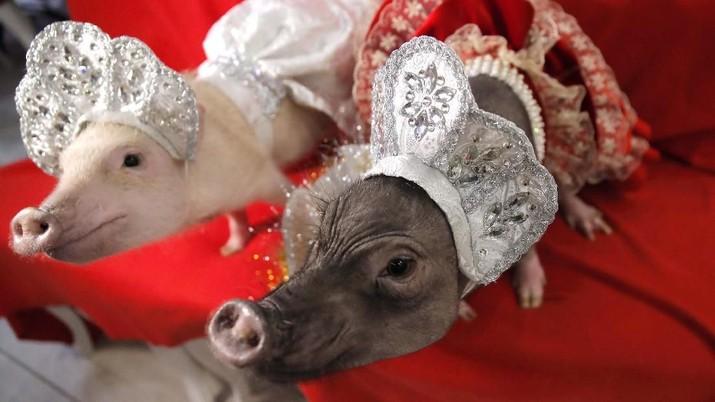 Pemerintah China kini punya prioritas penting nan mendesak yakni stabilitas daging babi