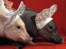 Kalahkan Perang Dagang, Mengapa Babi