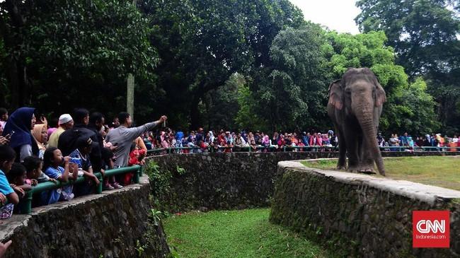 Gajah adalah salah satu hewan favorit yang ingin dilihat pengunjung di Kebun Binatang Raguna. (CNN Indonesia/ Harvey Darian)