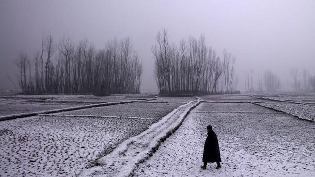Di suatu pagi di musim dingin, seorang pria berjalan melewati sawah di Pattan, Srinagar. (REUTERS/Danish Ismail)