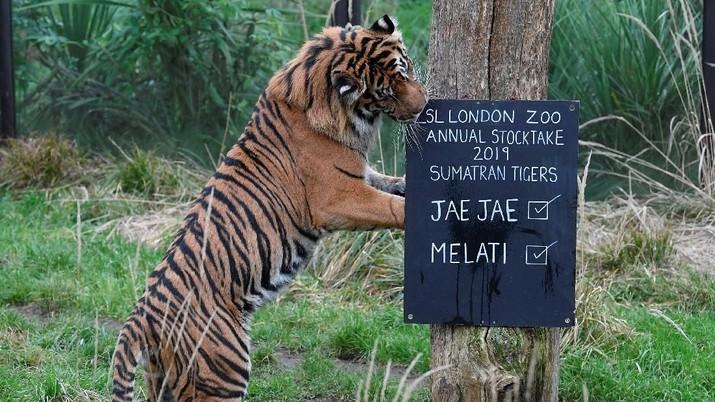Awal Tahun, Penjaga Kebun Binatang Sibuk Menyensus