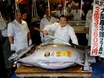 Demi Tuna, Ini Cerita Susi Tolak Beri Izin Kapal Jepang