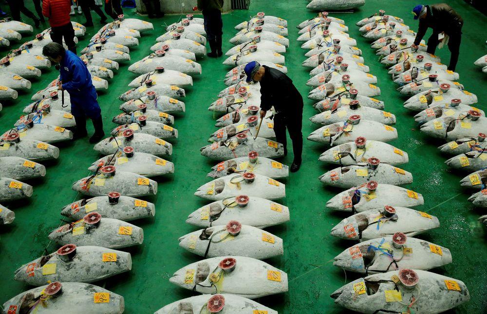 Tuna beku yang ditampilkan saat lelang tuna pertama awal tahun di pasar ikan Toyosu, Tokyo, Jepang (5/1/2018). Tradisi lelang Tahun Baru berbeda dengan biasanya karena para pedagang menggelar untuk pertama kalinya di pasar ikan terbesar Jepang yang baru saja direlokasi dari Tsukiji ke Toyosu. (REUTERS / Kim Kyung-Hoon)