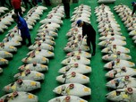 Ini Alasan Susi Ngotot Minta Jepang Hapus Bea Masuk Tuna RI