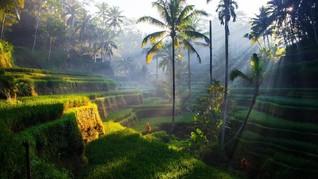 Sensasi Segar Makan Enak di Tepi Kebun Buah di Ubud