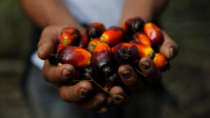 FILE PHOTO: A worker shows palm oil fruits at a plantation in Chisec, Guatemala December 19, 2018. REUTERS/Luis Echeverria/File Photo