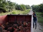 RI-India Siap Trade Off Bea Masuk CPO dan Gula