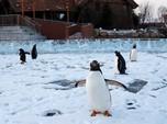 Lucunya Tingkah Para Penguin di Festival Es Harbin