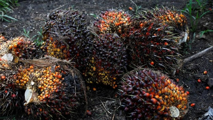 FILE PHOTO: Palm oil fruits are pictured at a plantation in Chisec, Guatemala December 19, 2018. REUTERS/Luis Echeverria/File Photo