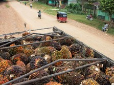 Ekspor Malaysia Meningkat, Harga CPO Naik Lagi