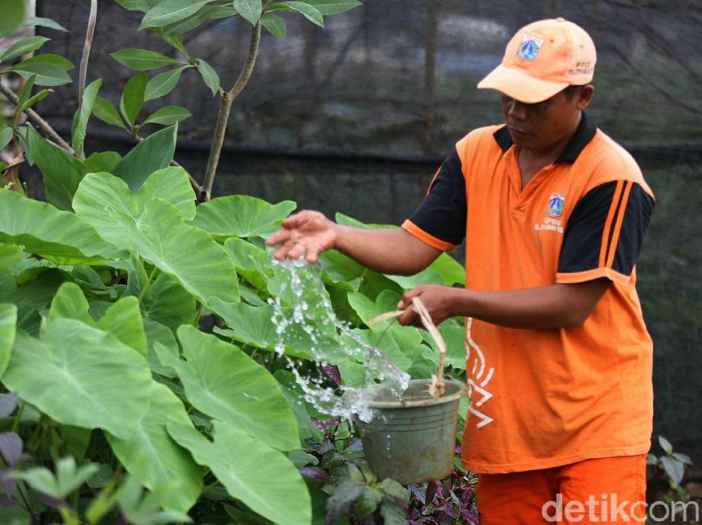 Petugas melakukan perawatan tanaman yang ada di Taman Kupu-kupu.