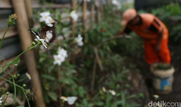 Lucu! Makhluk Cantik Penghuni Taman Kupu-kupu Kalimalang