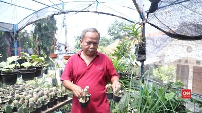 Koleksi Kaktus Pembawa Berkah Hari Tua Adjie