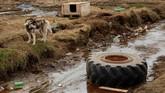 Naiknya permukaan laut dikhawatirkan dapat menenggelamkan kota Tasiilaq dan kota-kota lain yang berada dekat kutub.