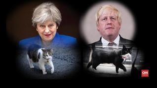 VIDEO: Larry, Kucing 'Brexit' di Kantor PM Inggris
