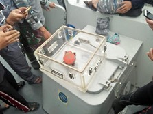 Penjelasan Lengkap KNKT Soal Bocornya CVR Lion Air JT 610