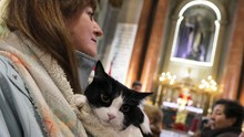 Memberkati Anjing dan Kucing Peliharaan di Gereja Madrid