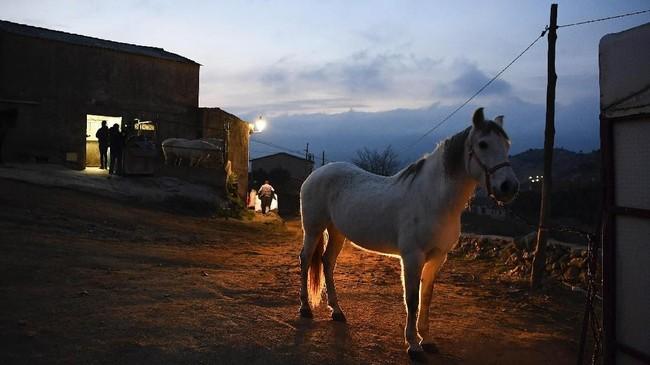 Seekor kuda berdiri dan bersiap untuk menjalani perayaan religi 'Luminarias' untuk menghormati Santo Anthony, patron dari hewan di kota San Bartolome de Pinares di Spanyol tengah.(AFP/GABRIEL BOUYS)