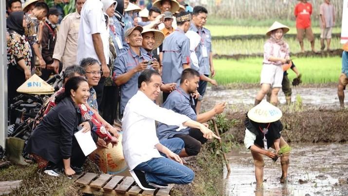 Sambil Turun ke Sawah, Jokowi Ajak Petani Ambil KUR