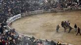 Setiap hari Minggu ketiga pada Januari, masyarakat Selcuk di Turki menggelar acara Selcuk-Efes Camel Wrestling Festival. (REUTERS/Murad Sezer)