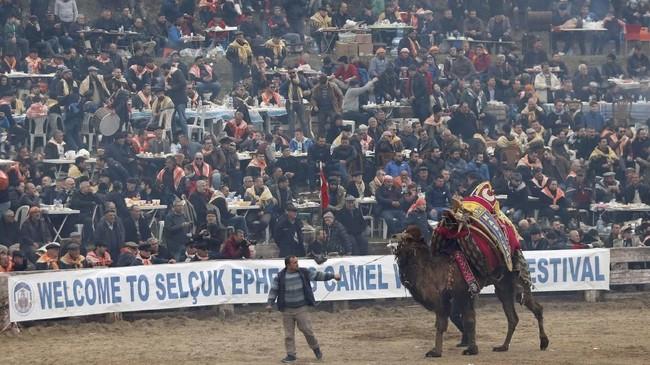 Festival gulat yang dikhususkan untuk unta ini sudah berlangsung selama ribuan tahun dan bisa berlangsung hingga Maret. (REUTERS/Murad Sezer)