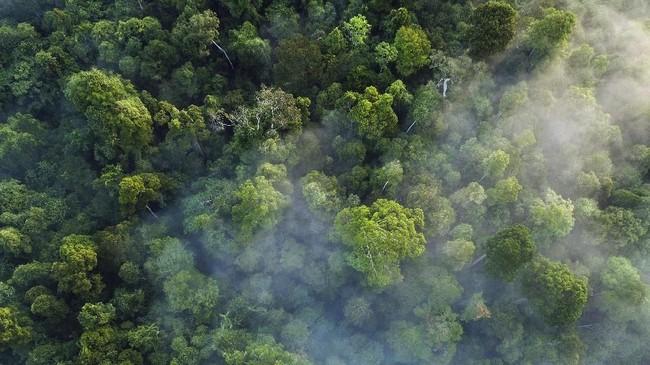 Keanekaragaman dan kekayaan hutan di Aceh sudah seharusnya dilindungi dari tangan-tangan jahil, karena jika diseragamkan para satwa itu tidak akan punya tempat berlindung.